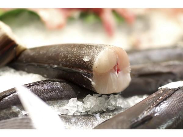 加拿大急凍銀雪魚【去頭及內臟】- 5/7 LB  (原條)
