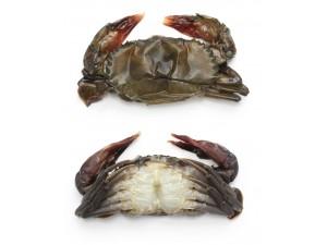 緬甸急凍軟殼蟹[NO.1]80/100