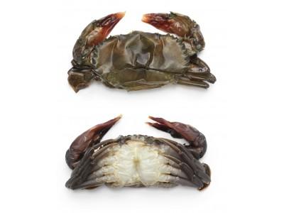 緬甸急凍軟殼蟹[NO.2]80/100